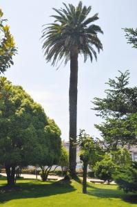 palmera 4